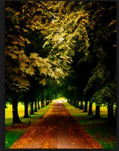 Å gå sin egen vei krever mange utfordrende valg.