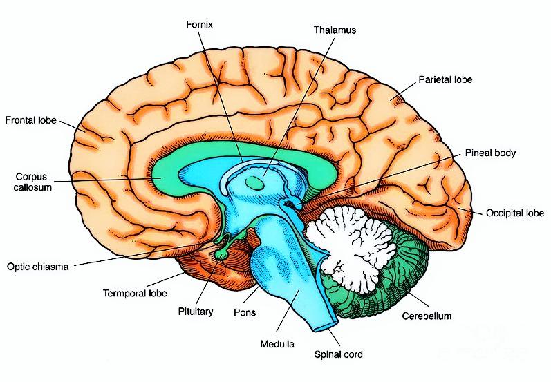 bokomtale hjernen og gud